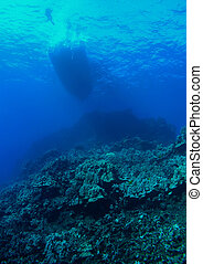 Diver Boat and Reef