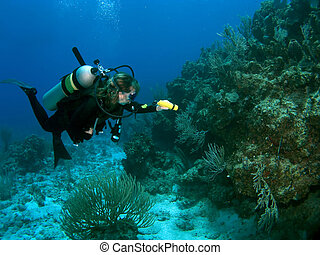 Diver Exploring the Reef with a Flashlight - Diver exploring...