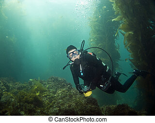 Diver looking into the camera in Catalina - Scuba Diver...
