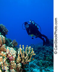 Diver with Lighted Reef - Diver looking at a Lighted Reef in...