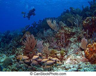 Scuba Diver swimming along a Reef