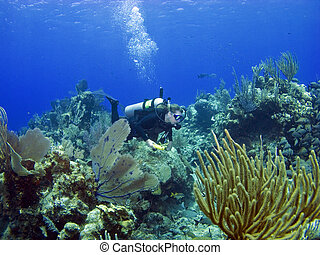 Scuba Diver swimming through a Cayman Island reef - Scuba...