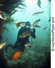 Underwater Photographer in Catalina - Underwater...
