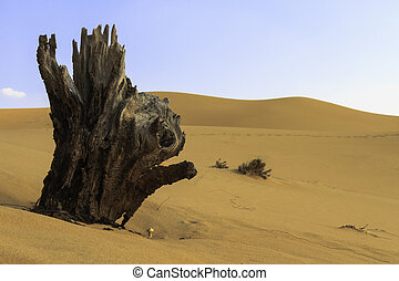 Jagged old tree stump in the desert