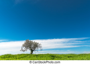 Lonely olive tree under dramatic blue sky
