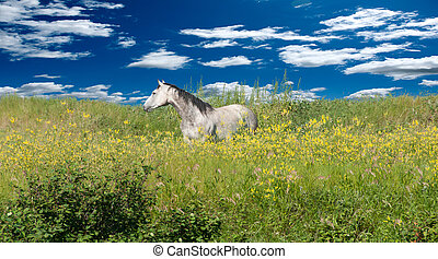A lone horse on a beautiful day