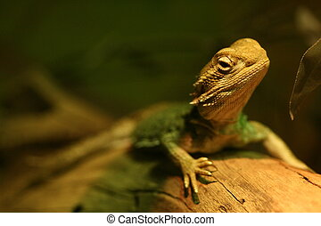 Bearded Dragon - A Bearded Dragon on a log