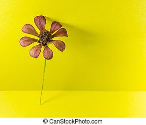 Compositae family flower
