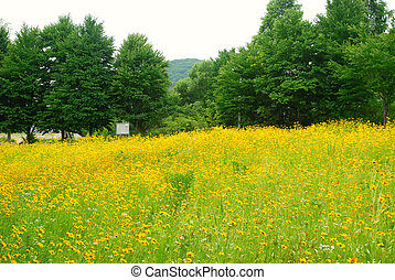 Flower filed in Paju city, Korea - A flower field in the...