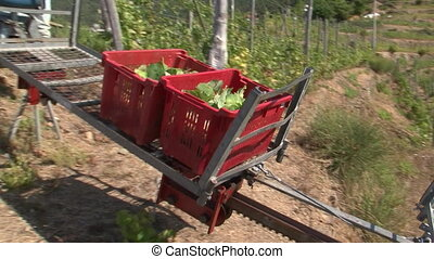 Carrying harvest with rack-rail car - Carrying harvested...