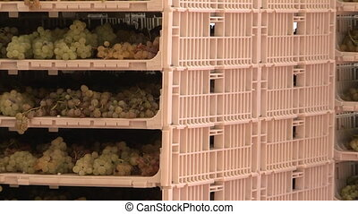 Grapes dehydrating on racks in preparation to make wine...