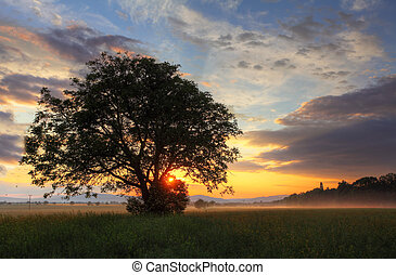 Alone tree at dramatic sunset on field