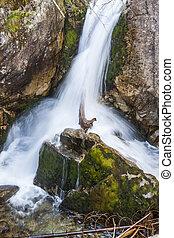 Mickiewicz waterfall in Tatra mountain.