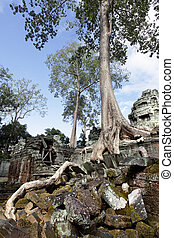 Ancient ruins at Angkor wat, Cambodia