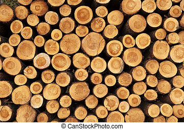 A pile of cut tree trunks giving a nice view of the...