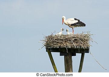 posición, encima, enfermería, Mirar, nido, dos, Cigüeña,...