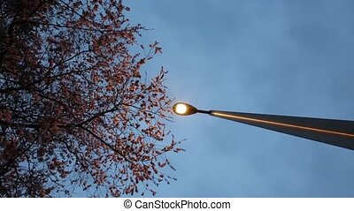 Cherry Blossom and a lamp post.