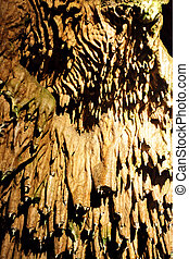 Stalactites - Roof of cave with much stalactites close-up