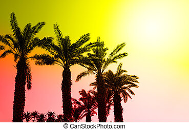 Oasis - Date palms in row at desert
