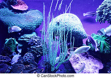 Coral colony - Underwater world. Coral colony at Red sea....