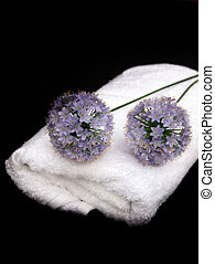 Pom Pom spa - bathroom cleansing with spa towel and purple...