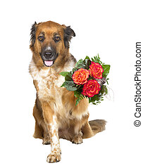 Adorable dog offering a posy of flowers - Adorable brown dog...