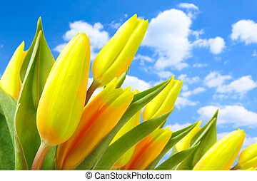 Tulips against blue sky with clouds
