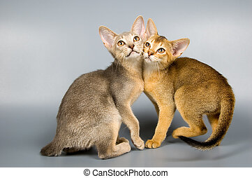 Kittens  in studio  - Two kittens  in studio