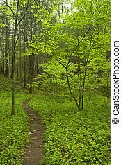 Trail, Spring, Whiteoak Sink, Great Smoky Mtns NP, TN -...