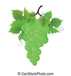 Bunch of green grapes, vector