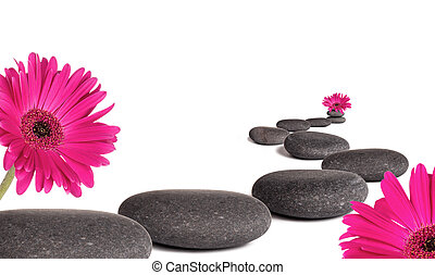 Lava stones with daisy flowers blooms, isolated on white background