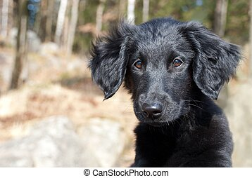 a black puppy dog looking something over