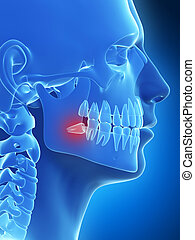 Highlighted wisdom teeth - 3d rendered illustration of the...
