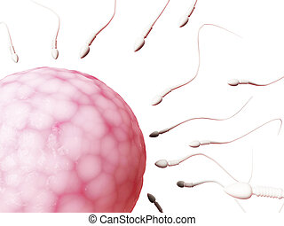 Egg cell and sperm - 3d rendered illustration of an egg cell...