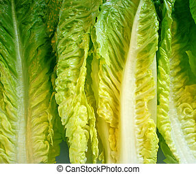 Romaine Lettuce Leaves - Fresh organic Romaine lettuce...