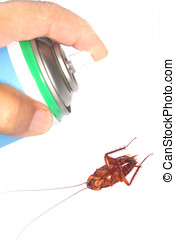 spraying insecticide - close-up of hand holding insecticide...