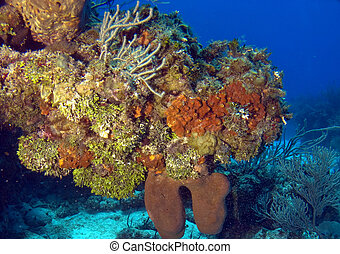 Colorful Reef Overhang in Cayman Brac