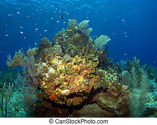Fish rich Coral Reef