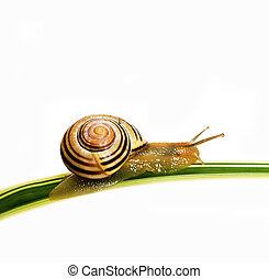 Snails, Various Concepts