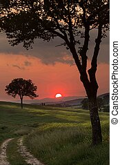 Silhouette trees in Tuscany - Warm sunlight at sunset with...