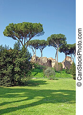 Palatine Hill in Rome - Palatine hill Domus Severiana ruins...