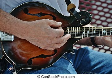 A musician playing a mandolin. - An accomplished musician...