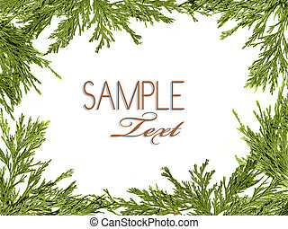 Green Christmas Tree Branches Bordering a White Background