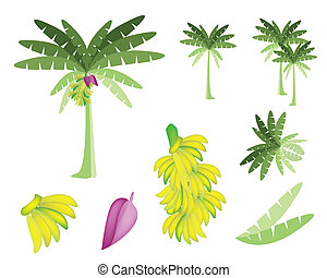 Set of Banana Tree with Bananas and Blossom - Ecological...