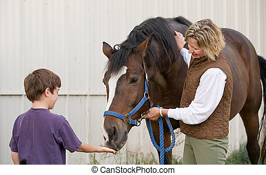 niño, alimentación, caballo