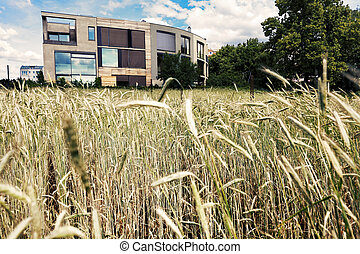Post-Modern Architecture Behind Wheat Field - A Post-Modern...
