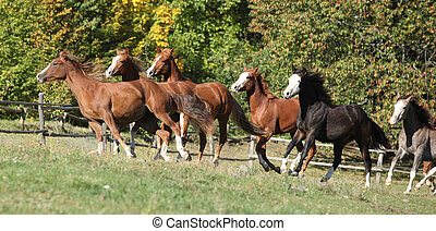 Batch of horses running on pasturage on autumn