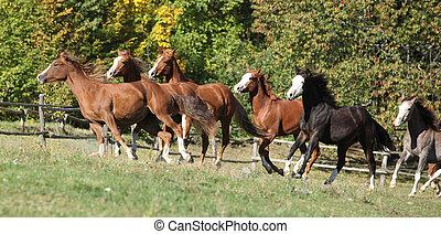 Batch of horses running on pasturage on autumn