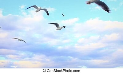 Ship-following seabirds - Seagulls following the cruise ship...