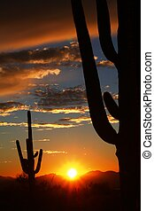 Sagruao Sunset - Saguaro Desert Tucson Mountain Park Sunset...